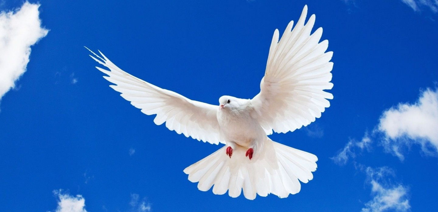 Cropped Blue Sky White Dove Flying New Desktop Wallpaper In Hd Free Download Birds Images Jpg Chin Christian Church